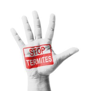 Stop Termites Today