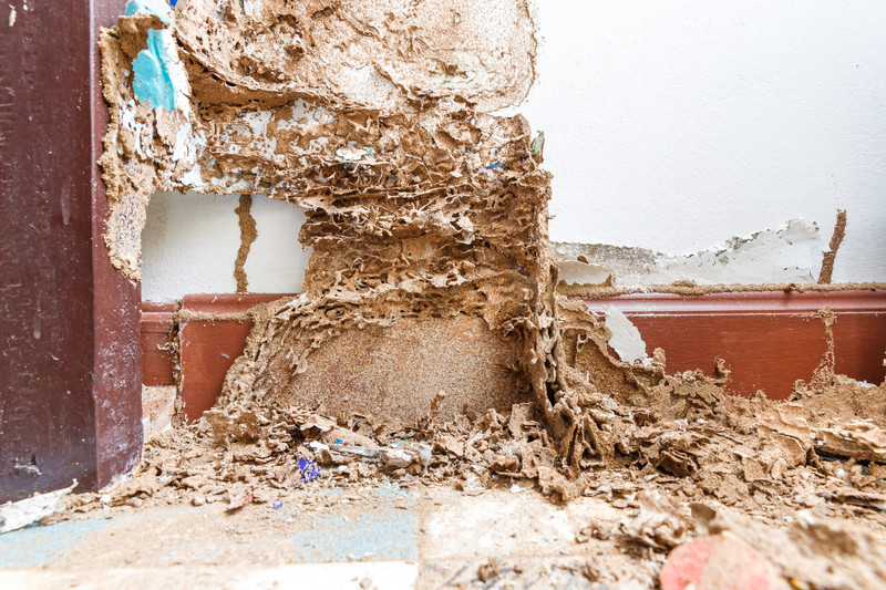 Termites eating wall